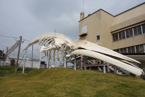 千葉,道の駅,和田浦,クジラ肉,WA・O!,崖観音17
