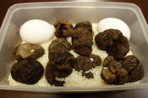トリュフ,保存,truffe,truffle5